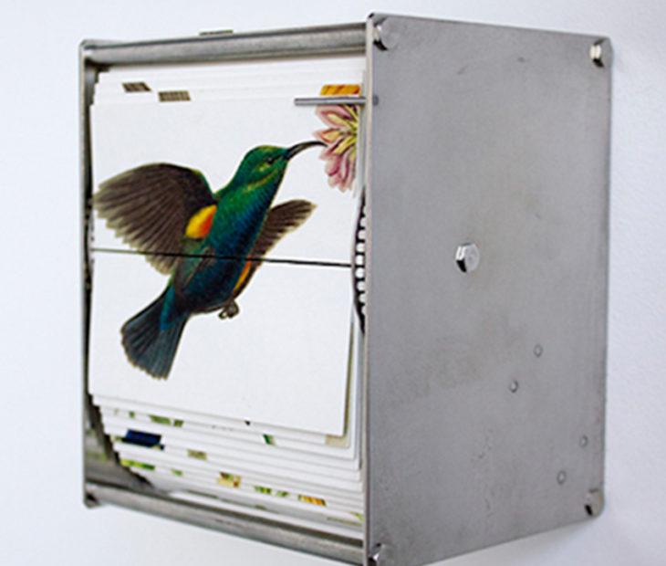 Pájaros que vuelan entre las páginas de un libro