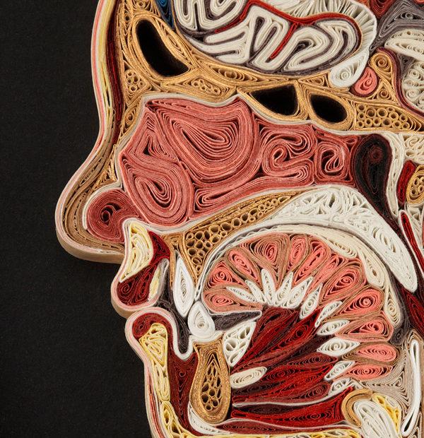 Aprende anatomía con la técnica del 'Quilling' y el papel, de la mano de Lisa Nilsson